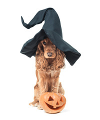 dog sitting in a witches hat and looks impressive