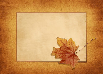 horizontal old blank card with a maple leaf
