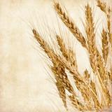Vintage wheat