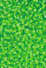 lucky clover on white background