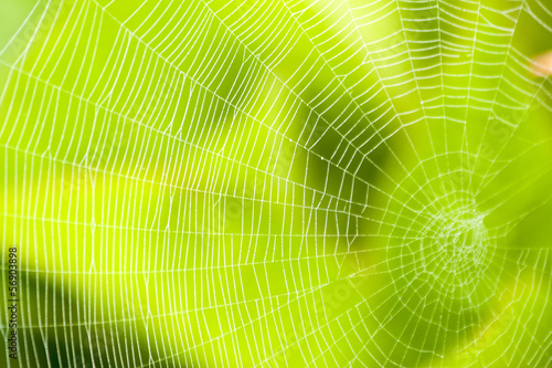 Aluminium Textures Spider web pattern for halloween scary spiderweb