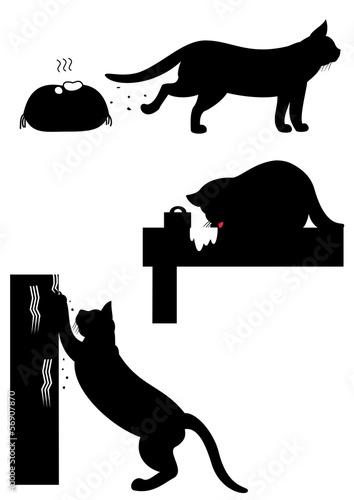 猫の問題行動