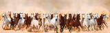 Horses herd running in the sand storm - 56909057