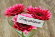 Congratulations card with dark pink gerbera daisies