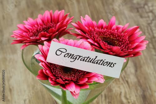 Congratulations card with dark pink gerbera daisies