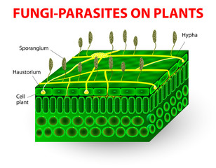 Fungi parasites on plants