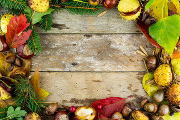 frame with nuts, acorns, chestnuts/autumn/fr uits