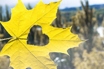 autumn leaf with heart