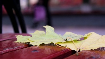 leaves on the bench