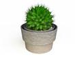 Cactus in 3D