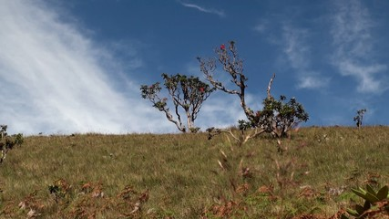 Montane grassland with Rhododendrons at Horton Plains NP