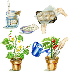 Planting tomato illustrations set