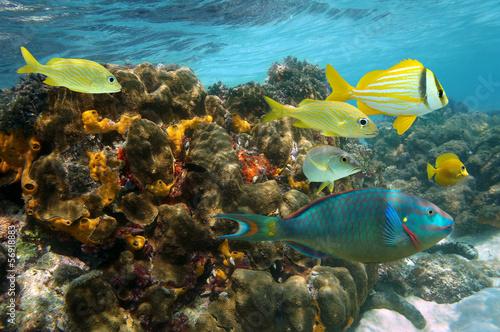 Tuinposter Koraalriffen Undersea colors in a coral reef