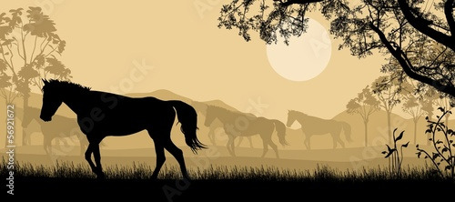Herd of horses background