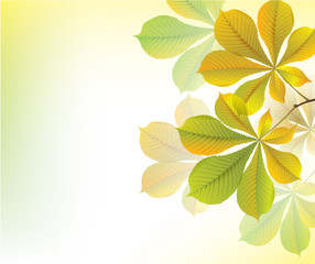 Beautiful yellow background with chestnut leaves