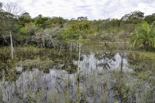 Brazil, Pantanal, flooded forest