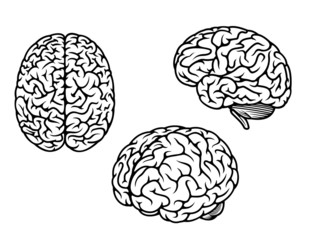 Human brain in three planes