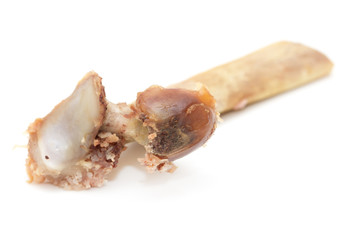 gnawed bone on a white background
