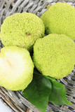 Osage Orange fruits (Maclura pomifera), isolated on white