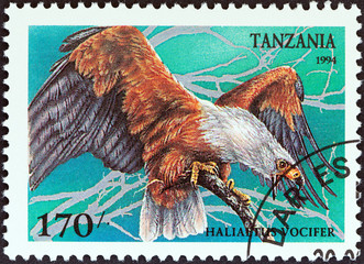 African fish eagle (Haliaeetus vocifer) (Tanzania 1994)