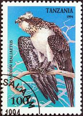 Osprey (Pandion haliaetus) (Tanzania 1994)