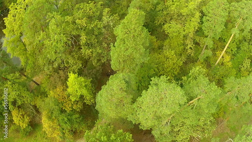 Flight over wood. Landscape