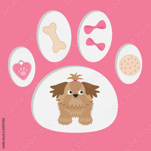 Little glamour tan Shih Tzu and dog's stuff  in the paw print.