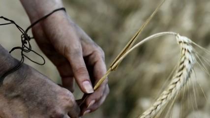 Hands holding barley. Hunger, starvation concept.
