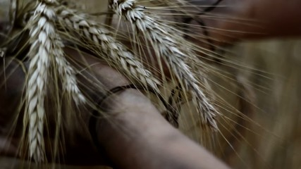 Tied hands holding barley. Hunger concept.