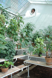 Hothouse Plants on Benches