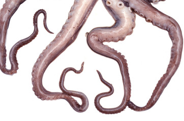 Tentáculos de pulpo