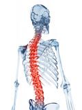 Fototapety 3d rendered illustration of a glass skeleton