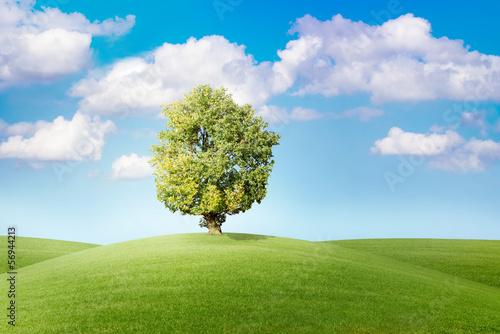 Fototapeten,baum,grün,welt,wolken