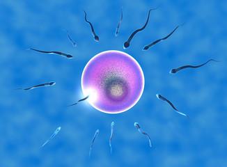 Concepimento ovulo e spermatozoi