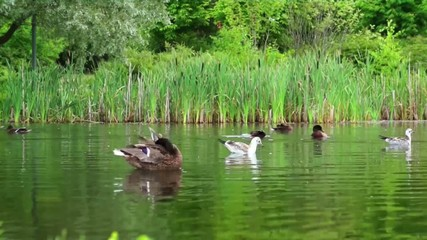 Timelapse - Busy day in the duck pond