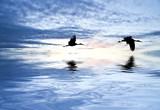 Fototapety cruzando el ancho mar