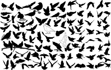 Set of 100 birds and silhouettes of birds