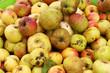 Apfelsorten für Streuobstwiesen (Fallobst)