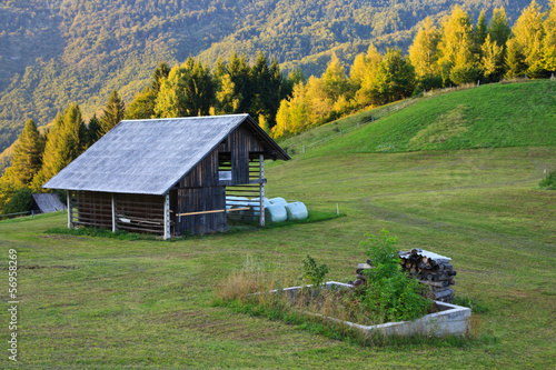 Meadow in Slovenia