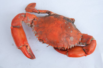 Steamed Sea Crab