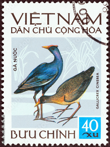 Watercock (Gallicrex cinerea) (Vietnam 1972)
