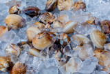 Fresh clams on fish market.