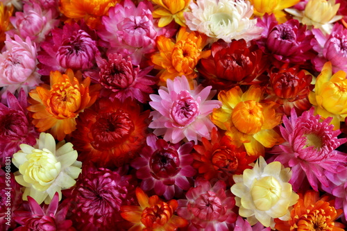 Fridge magnet background  of multicolored autumn flowers