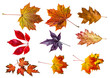autumn leaves - collection