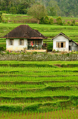 Indonesia countryside on the West Sumatra island