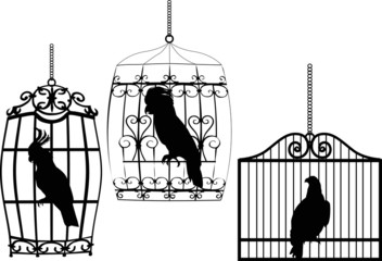 collection of birds in cages on white