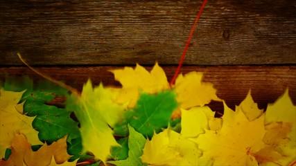 Autumn maple leaf on old wooden boards episode 1