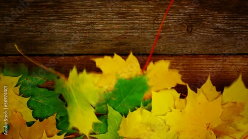 Autumn maple leaf on old wooden boards episode 1