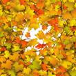 Hintergrund, Herbst, Blätter, Herbstblätter, Ast, Zweig, Blatt