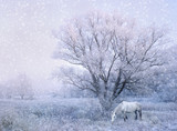 winter snowfall landscape with white horse